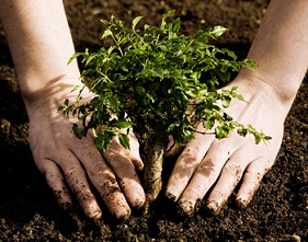 planting tree pic cropped